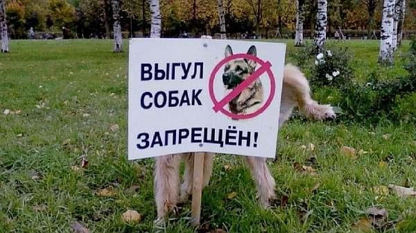 Запрет на выгул