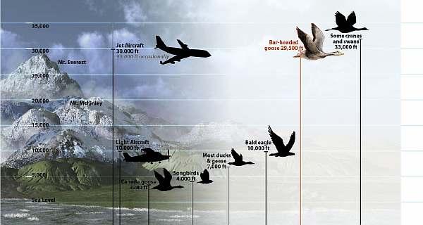 Сравнение с птицами