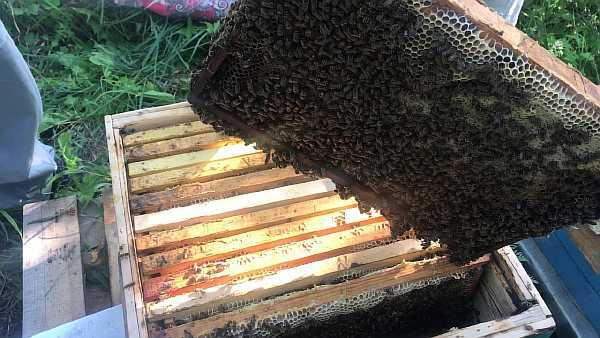 Пчелы в селе