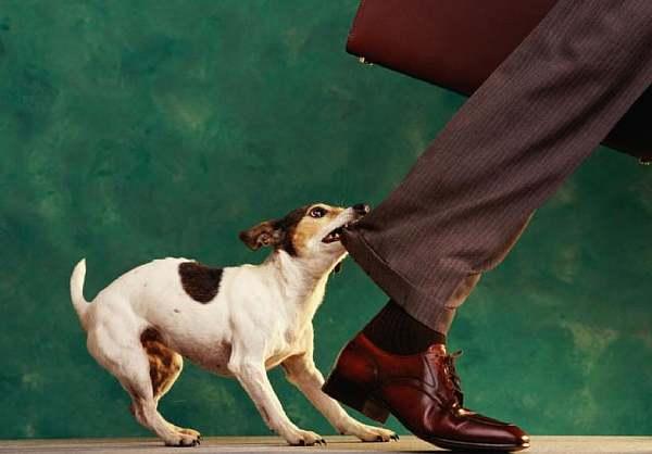 Собака в подъезде