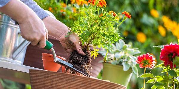 Растения на грядках